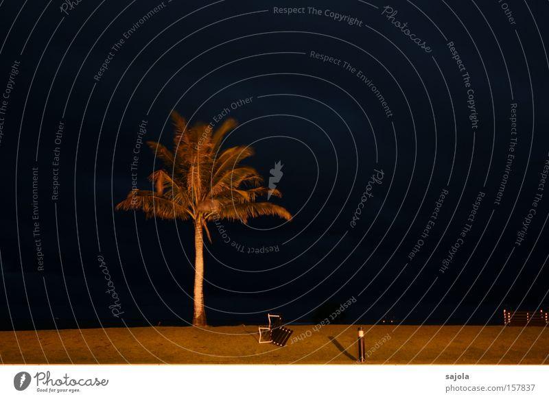 palme im sturm Himmel Natur blau Pflanze Strand Ferien & Urlaub & Reisen Einsamkeit Umwelt Traurigkeit Küste Rasen bedrohlich Bank Sturm Palme erleuchten