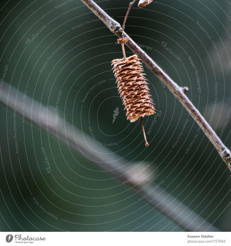 Einsam Baum grün Einsamkeit Herbst Sträucher Ast Blühend Zweig Ahorn Buche