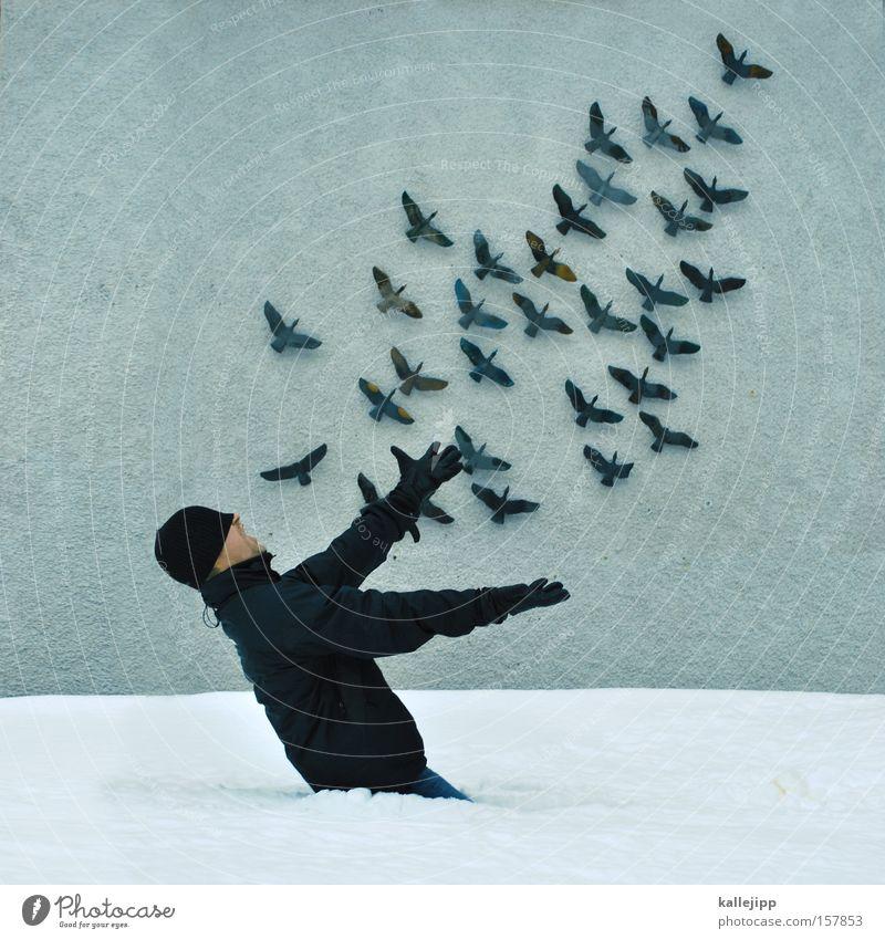 papageno Mensch Schnee Vogel fliegen Luftverkehr Feder fangen Fee Schwarm Vogelschwarm Wanddekoration Vogelkäfig Wandschmuck Operette Wandschrank