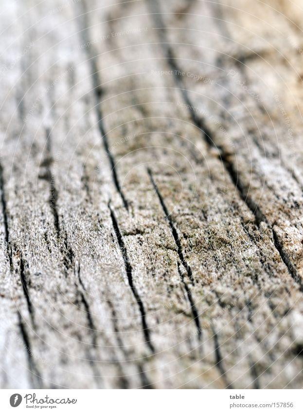 Gut Holz alt grün schwarz Tod grau trocken Riss Makroaufnahme verwittert Spalte Brennholz Totholz