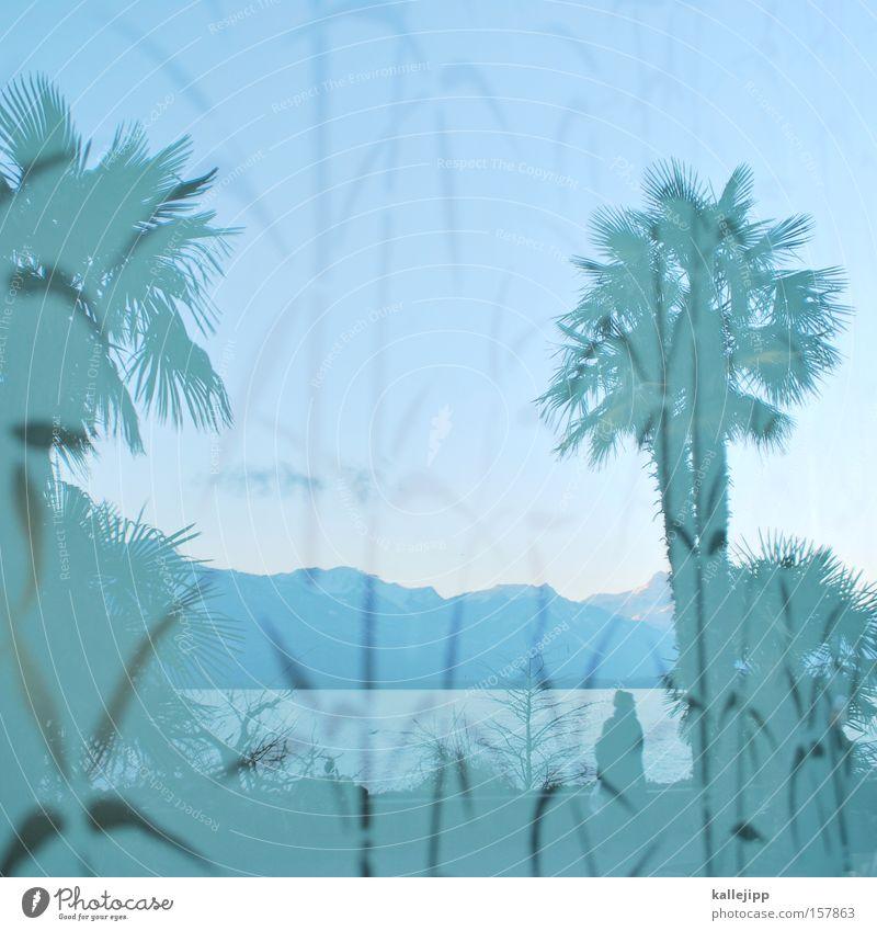 montreux Palme See Genfer See Wasser Pflanze Reflexion & Spiegelung Promenade Berge u. Gebirge Schweiz Ferien & Urlaub & Reisen Küste Alpen