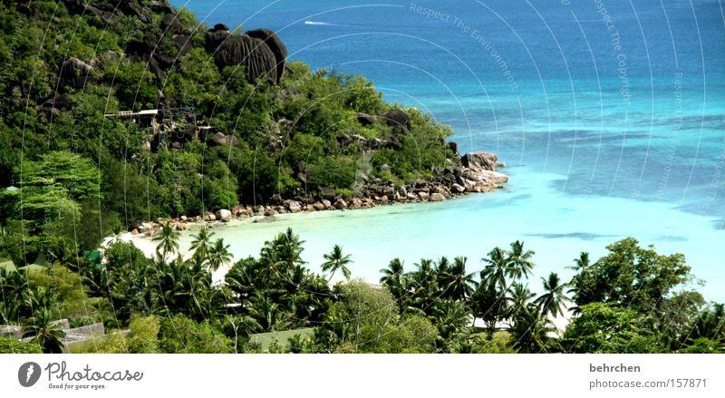 ein stück vom himmel Seychellen Palme Trauminsel Flitterwochen Fernweh Strand Bucht Wasser Meer Riff Schnorcheln genießen Küste praslin Ferien & Urlaub & Reisen