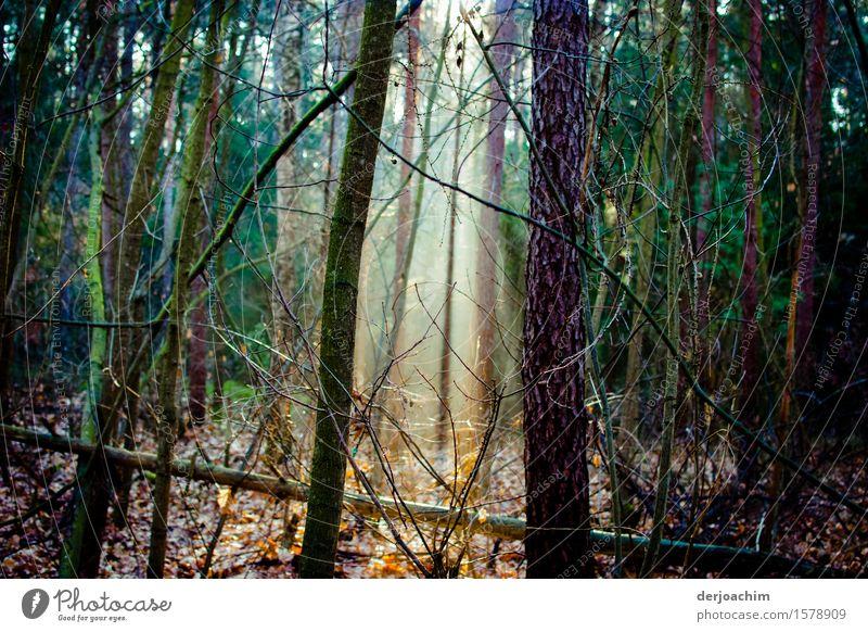 die richtige Zeit Natur schön Baum Erholung Einsamkeit ruhig Freude Wald Frühling Holz außergewöhnlich Deutschland wandern genießen Lächeln einzigartig