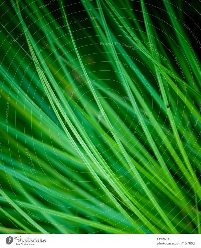 Graswelt Halm Wiese grün Pflanze Botanik Schilfrohr Röhricht Umwelt Makroaufnahme Nahaufnahme Rasen makro detail blades of grass pflanzlich Wachstum flora