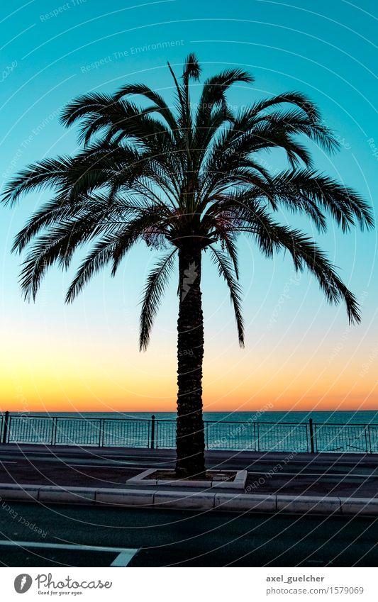 Nice Palmtree Ferien & Urlaub & Reisen Tourismus Abenteuer Ferne Sommer Sommerurlaub Strand Meer Landschaft Sonnenaufgang Sonnenuntergang Schönes Wetter