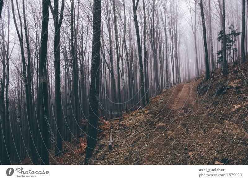 Gloomy Woods Natur Landschaft Herbst Winter schlechtes Wetter Nebel Baum Wald Wege & Pfade gruselig Abenteuer geheimnisvoll kalt Farbfoto Außenaufnahme