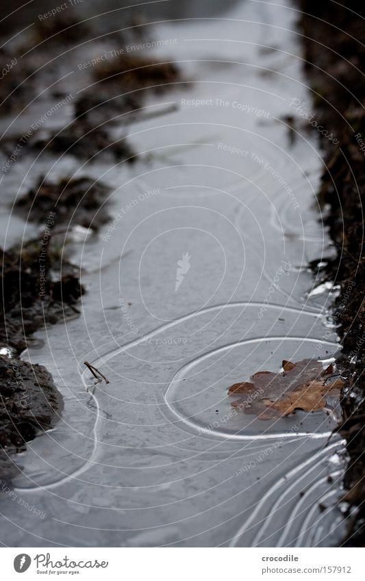 Eiszeit Wasser gefroren Blatt Furche Erde Kurve Linie Muster Fußweg kalt Winter Makroaufnahme Nahaufnahme