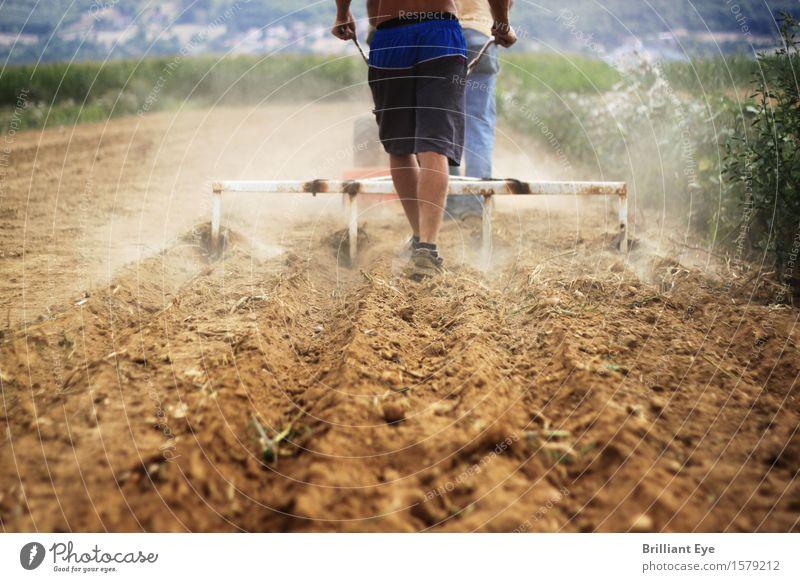 Pflügen Arbeitsplatz Landwirtschaft Forstwirtschaft 1 Mensch 18-30 Jahre Jugendliche Erwachsene Umwelt Natur Feld Arbeit & Erwerbstätigkeit braun Kraft