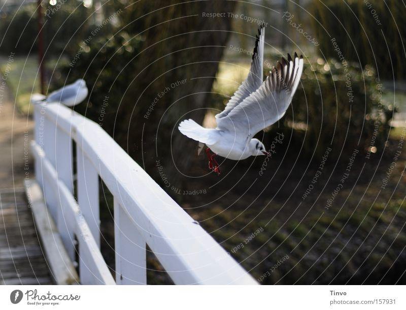 up and away ruhig Vogel Park fliegen Beginn Flügel Möwe Brückengeländer Abheben Vogelflug Holzbrücke