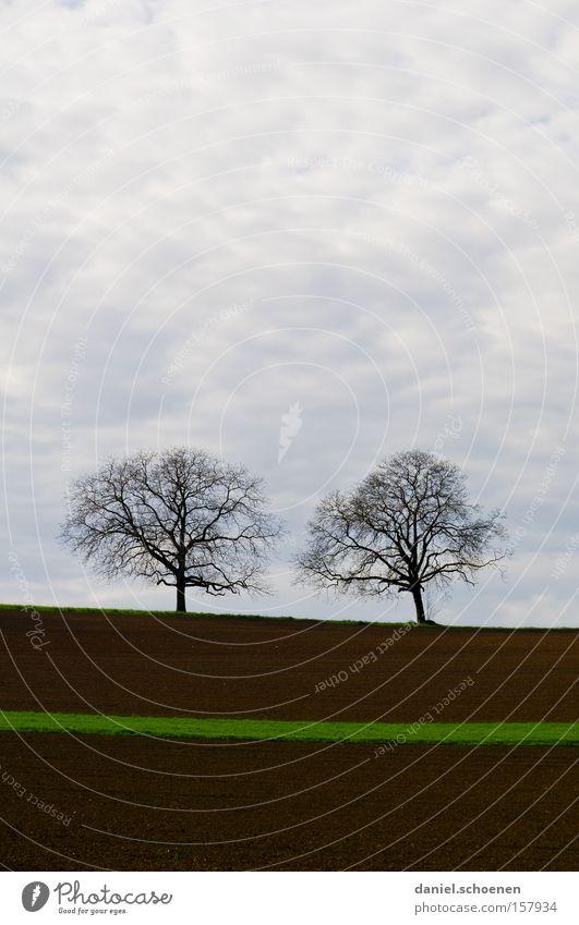 grüner Hoffnungsstreifen Himmel Baum grün Wolken Frühling braun Feld Erde Landwirtschaft