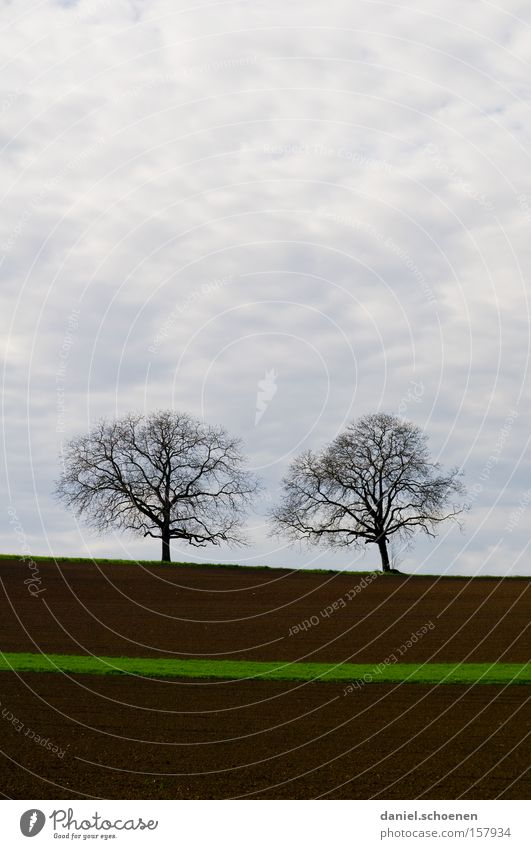 grüner Hoffnungsstreifen Himmel Baum Wolken Frühling braun Feld Erde Landwirtschaft
