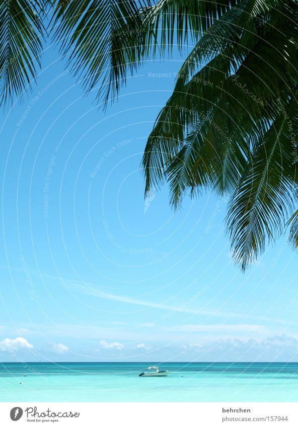 wunderbare einsamkeit Seychellen Palme Wasserfahrzeug türkis Ferne Meer Horizont träumen Trauminsel Paradies Flitterwochen Himmel Fernweh Strand Küste