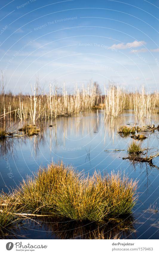 Blick ins Moor Ferien & Urlaub & Reisen Tourismus Ausflug Abenteuer Ferne Freiheit Umwelt Natur Landschaft Pflanze Tier Frühling Schönes Wetter Baum Gras Sumpf