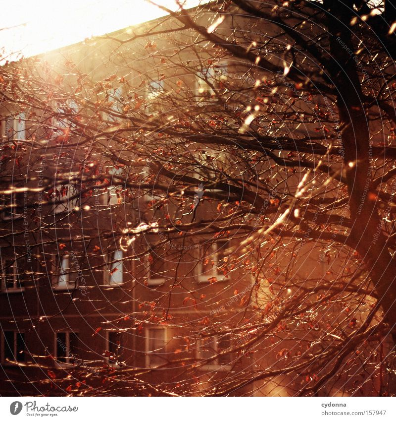 Zusammen Haus Block Beton DDR Nostalgie Ostalgie Plattenbau Baum Sonne Licht Gegenlicht Häusliches Leben Heimat Wohlgefühl Kommunizieren
