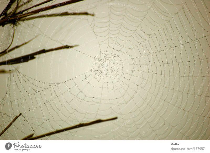 Baumeisters Werk grau Wassertropfen nass trist Netz zart bauen fein trüb filigran Spinnennetz gewebt gesponnen