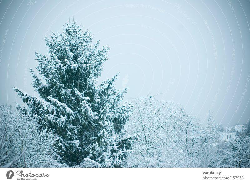 Winterlich Tanne Baum kalt Schnee zyan Grünstich Landschaft Dezember Januar November Jahreszeiten Wald beschneit