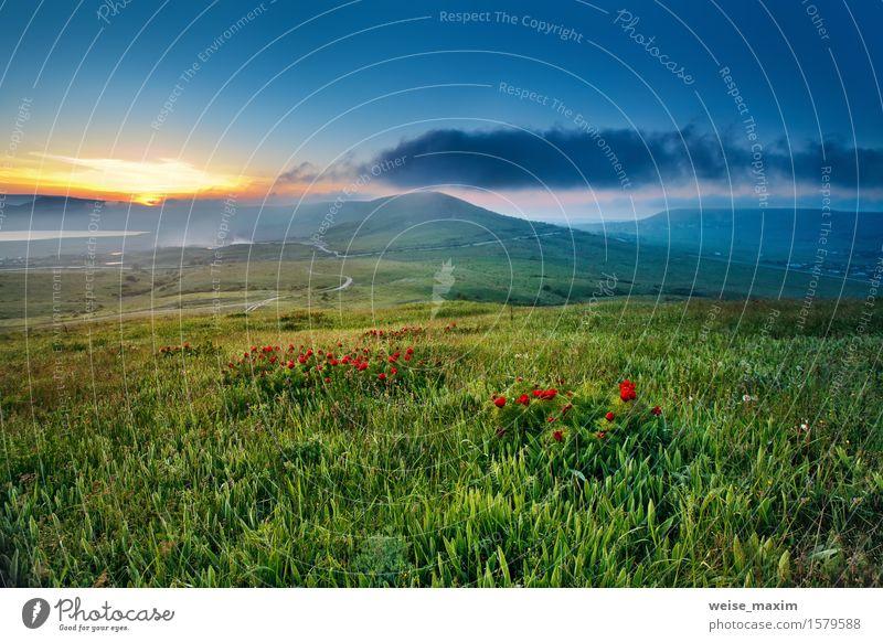 Frühlingssonnenuntergang in den Hügeln mit dem roten Blumenblühen Himmel Natur blau grün schön Sommer Sonne Landschaft Blatt Wolken Berge u. Gebirge Blüte Wiese