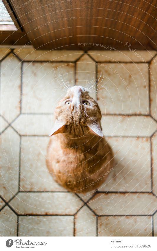 Katzenklappe Häusliches Leben Wohnung Eingangstür Fliesen u. Kacheln Tier Haustier Tiergesicht Fell 1 Blick sitzen warten authentisch niedlich rot selbstbewußt