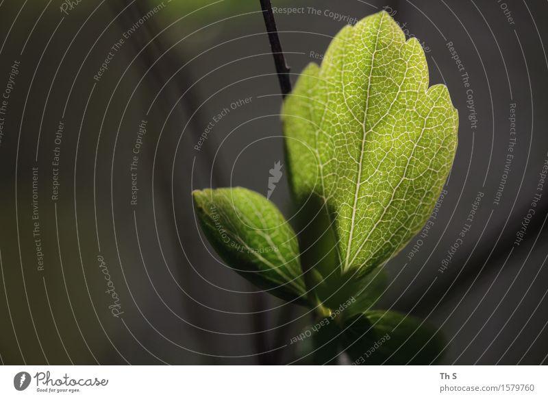 Blatt Natur Pflanze grün schön ruhig Winter schwarz Herbst Frühling natürlich braun frisch elegant leuchten authentisch