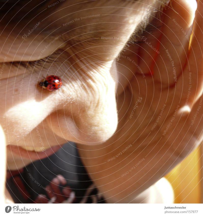 Kitzelt Kind Gesicht Junge Glück lachen Insekt Wissenschaften Kindheit Marienkäfer Käfer krabbeln