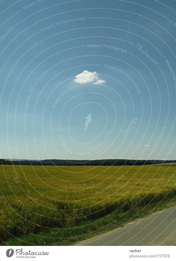 Eine Wolke stört noch keinen Sommer Himmel Natur Ferien & Urlaub & Reisen grün Wolken Erholung Landschaft Wärme Zufriedenheit Feld Schönes Wetter Landwirtschaft