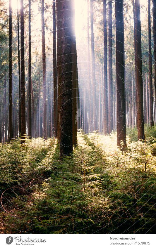 Waldfrühling Ausflug Sommer wandern Natur Landschaft Pflanze Sonne Frühling Schönes Wetter Baum positiv Stimmung Fröhlichkeit Hoffnung Erholung erleben