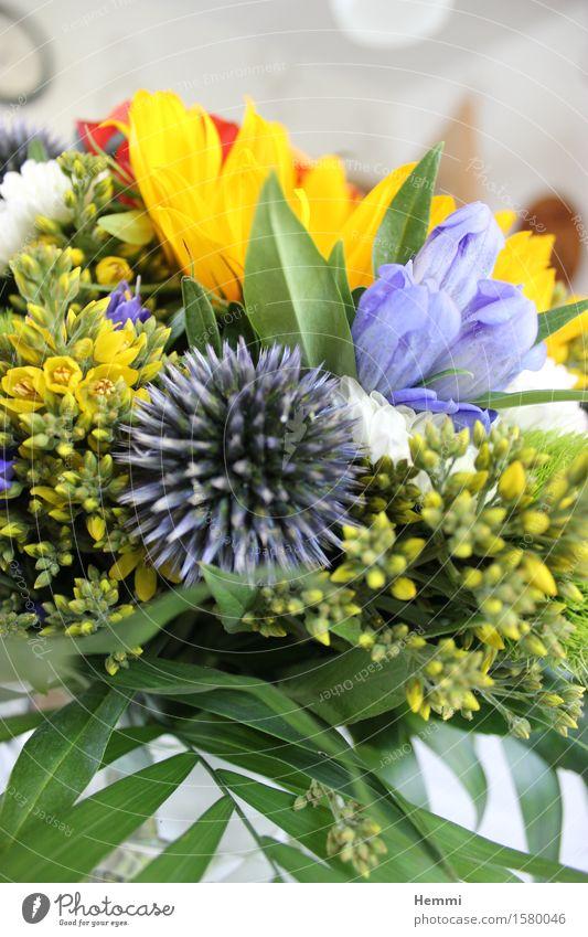 Blumenstrauß Umwelt Natur Landschaft Pflanze gut schön Geburtstag Geburtstagsgeschenk Farbfoto Innenaufnahme Nahaufnahme Detailaufnahme Makroaufnahme