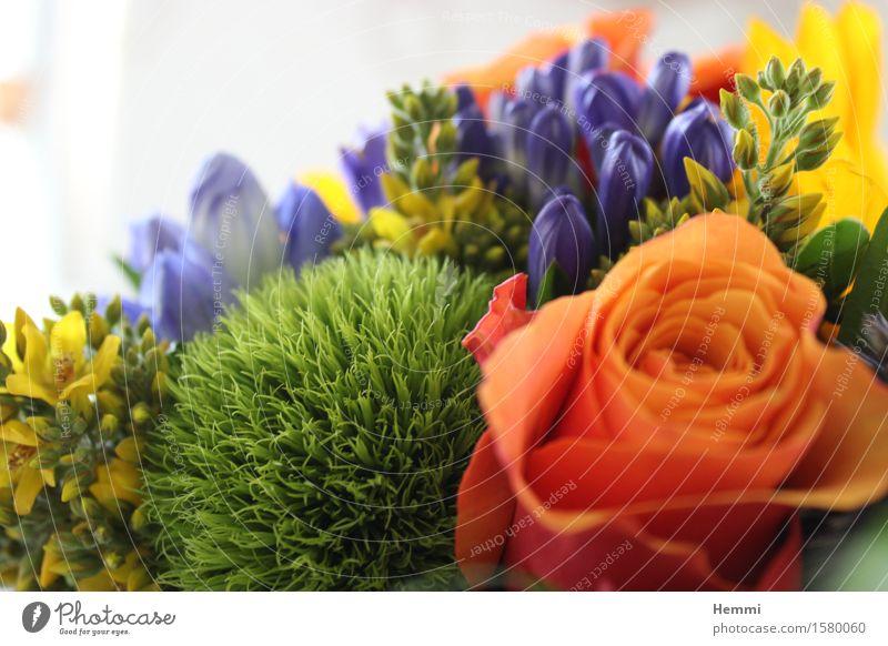 Geburtstags-Strauß Natur Landschaft Pflanze Blume Sträucher Moos Rose Tulpe Gefühle dankbar Neugier Geburtstagsgeschenk Blumenstrauß Farbfoto mehrfarbig