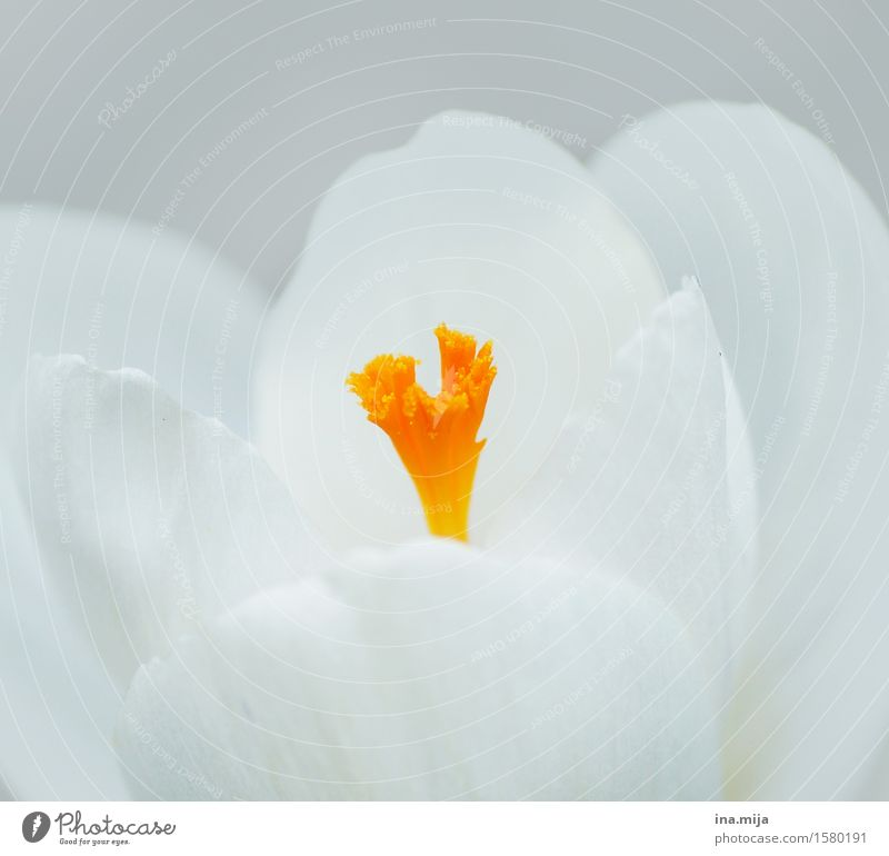 Erwachen der Farben Natur Pflanze weiß Umwelt gelb Frühling orange