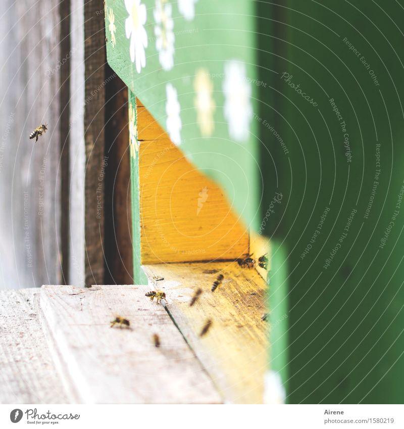 Wartet doch! grün Tier Umwelt gelb natürlich Holz klein fliegen Zusammensein Tiergruppe Freundlichkeit Landwirtschaft Wirtschaft Biene positiv Teamwork