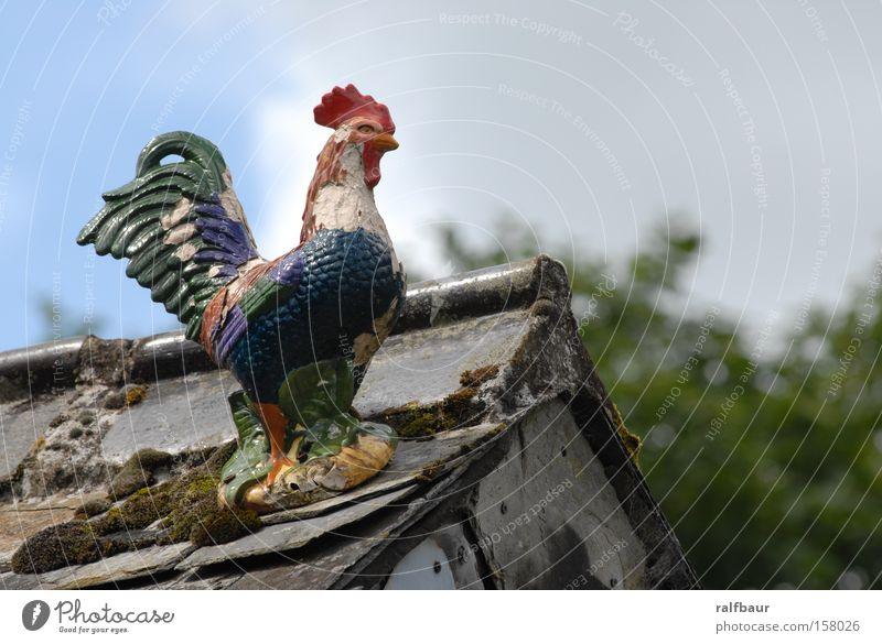 hölzerner Hahn Haushuhn mehrfarbig Dach Freiheit Außenaufnahme Vogel Tierfigur Dekoration & Verzierung Kitsch Hahnenkamm
