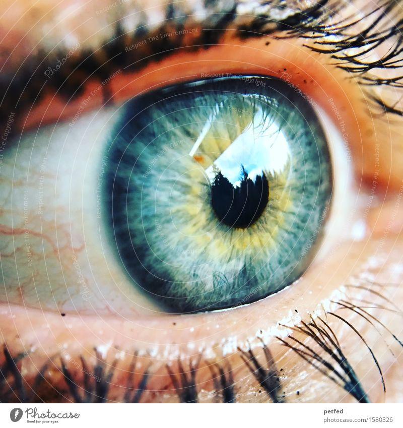 Licht des Leibes Auge Wimpern Wimperntusche Regenbogenhaut Pupille Gefäße Blick blau gelb grau grün schwarz weiß Reflexion & Spiegelung Leben einzigartig