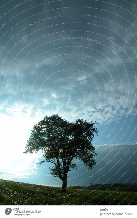 treen in heaven Himmel Baum Sonne Wolken Erde Baumkrone