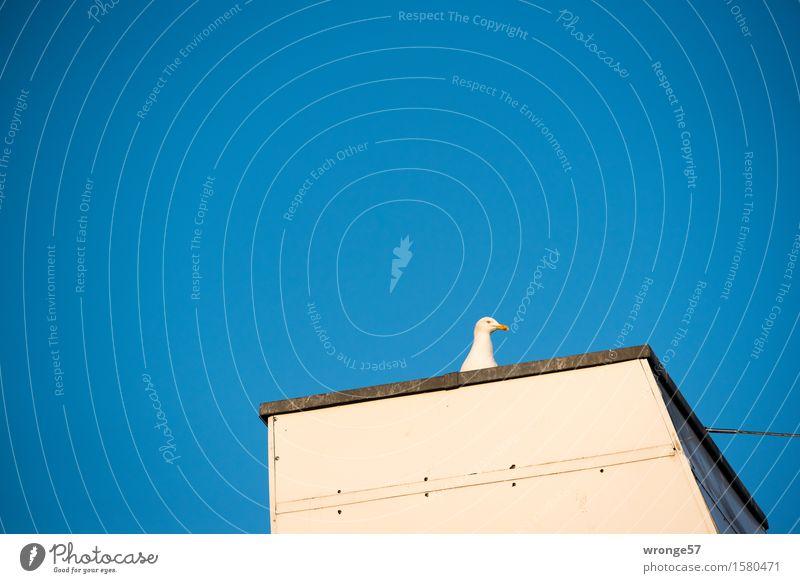 Haste Fisch? Frühling Sommer Dach Tier Wildtier Vogel Möwe 1 beobachten blau braun weiß Blauer Himmel Wolkenloser Himmel Neugier Appetit & Hunger