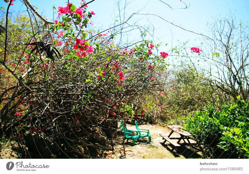 genießen | garten eden Ferien & Urlaub & Reisen Tourismus Ausflug Abenteuer Ferne Freiheit Natur Pflanze Himmel Schönes Wetter Baum Sträucher Blatt Blüte Garten