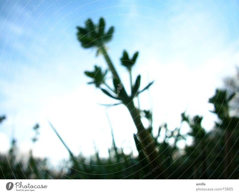 unscharf Unschärfe Pflanze grün Wiese Wolken Weitwinkel Himmel