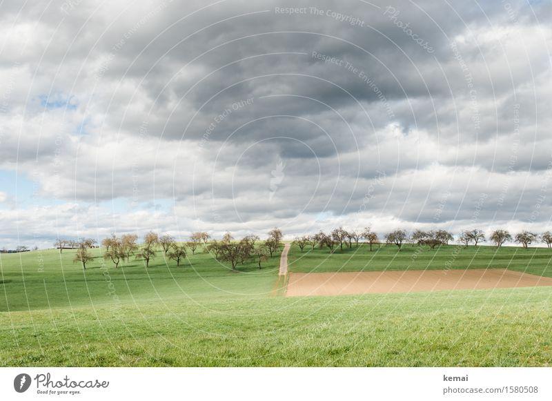 Streuobstwiesen Umwelt Natur Landschaft Pflanze Himmel Wolken Gewitterwolken Sonnenlicht Sommer Wetter Baum Gras Nutzpflanze Obstbaum Wiese Feld Hügel