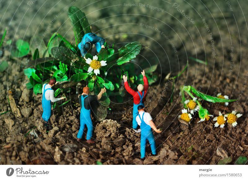 Miniwelten - Blumenernte Gartenarbeit Arbeitsplatz Dienstleistungsgewerbe Team Mensch maskulin Mann Erwachsene 5 Pflanze Baum Blatt Blüte blau grün Querformat