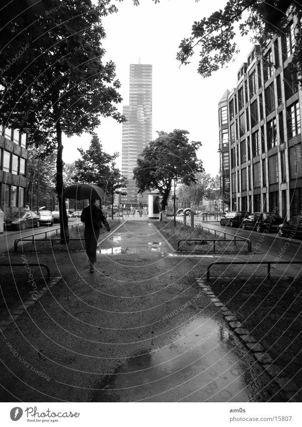 Köln Mediapark Hochhaus Haus Frau Regenschirm nass Baum Gasse Architektur Dame Wasser