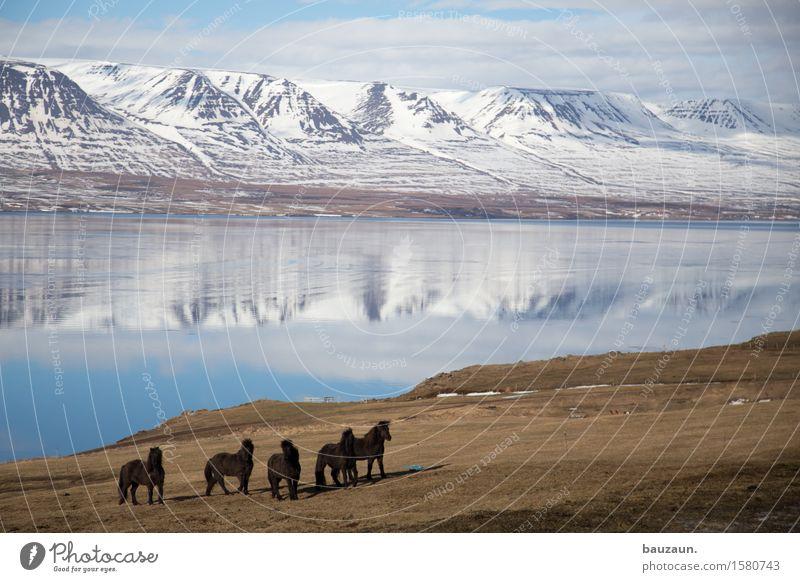 pferde. Ferien & Urlaub & Reisen Tourismus Ausflug Abenteuer Ferne Freiheit Winter Reiten Umwelt Natur Landschaft Erde Wasser Himmel Wolken Schönes Wetter
