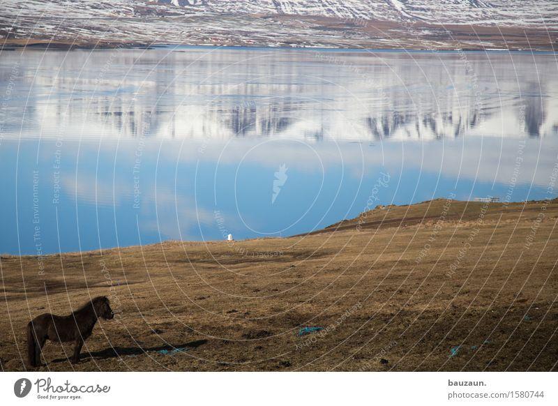 pferd. Natur Ferien & Urlaub & Reisen schön Wasser Landschaft Tier Ferne Berge u. Gebirge Umwelt Schnee Gras Küste Glück Freiheit Felsen Tourismus