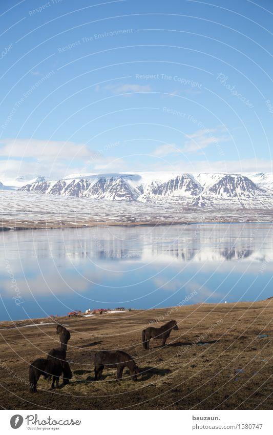 750. Himmel Natur Ferien & Urlaub & Reisen schön Wasser Landschaft Tier Freude Ferne Winter Berge u. Gebirge kalt Umwelt Gras Küste Freiheit