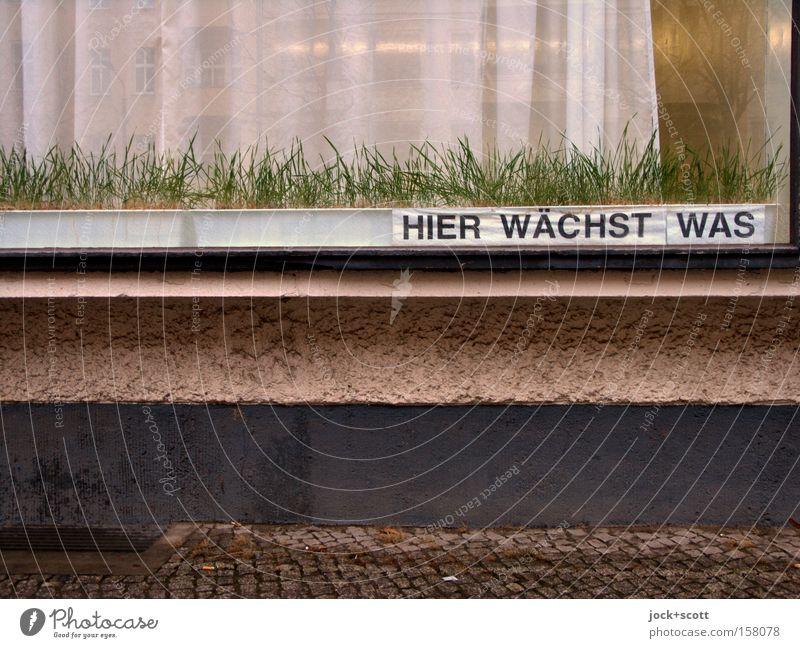 dem Gras beim wachsen zusehen Stadt schön grün Berlin Gebäude Zeit Stein Fassade Wachstum Kraft Glas Hinweisschild Papier planen viele
