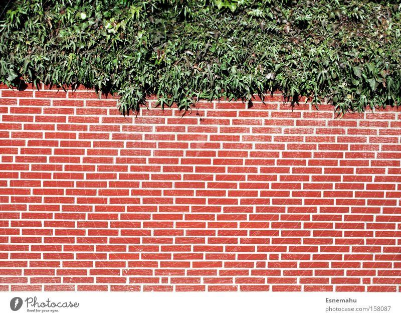 Auf der Mauer auf der Lauer sitzt ne kleine Pflanze weiß rot hell Sträucher Backstein Symmetrie