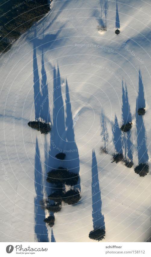 Vogel guckt runter IV Baum Winter kalt Schnee Landschaft Linie Flugzeug Aussicht Tanne diagonal Nadelbaum Tal gerade Schwarzwald Mittelgebirge