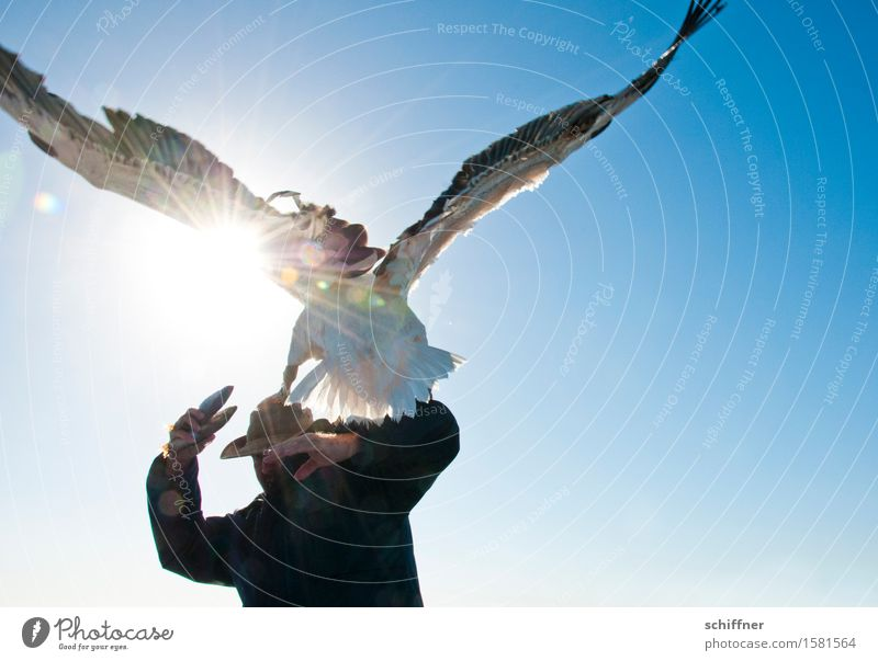 schwarzsehen | Fingerfood Mensch maskulin Mann Erwachsene 1 Tier Wildtier Vogel füttern blau Pelikan ducken abwehrend Fisch Flügel Gegenlicht Angriff
