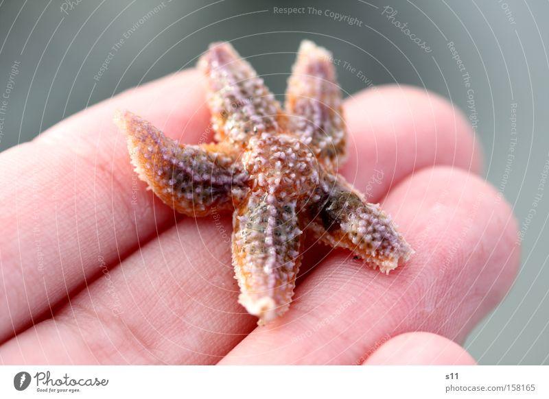 StarFish Hand Wasser schön Meer Sommer Strand Sand Küste Haut Arme nass Finger 5 Lebewesen Sammlung Unterwasseraufnahme
