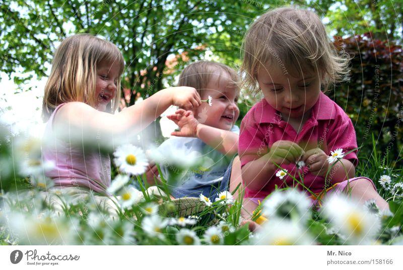 frühlingsgefühle Kind Familie & Verwandtschaft grün Sommer Mädchen Freude Wiese Junge Frühling lachen Garten lustig Freundschaft 3 Blume Pflanze