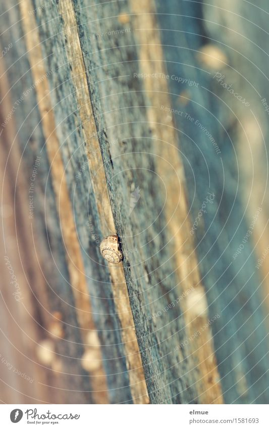 im Geschwindigkeitsrausch Zaun Zaunpfahl Schnecke Schneckenhaus Farbanstrich Zeitlupe klein mehrfarbig Willensstärke Tatkraft beweglich standhaft Trägheit
