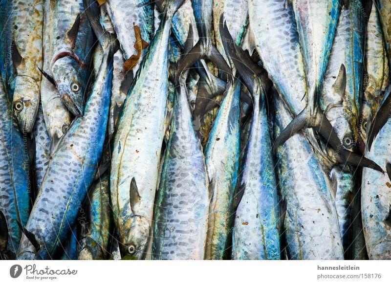 fisch kerala Fisch Indien Auge blau Wasser Ernährung Lebensmittel Stapel Schuppen